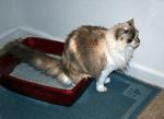 Medical Causes of Pet Behavioural Problems