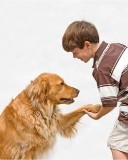 Friend or Fiend – balancing children's interactions with dogs.