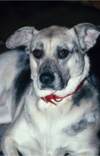 Anxieties and Other Mood Disorders of Pets