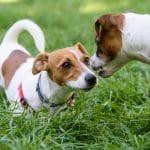 Stop Dog Aggression!