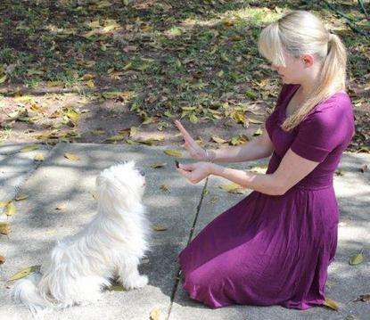 Some Basic Obedience Commands