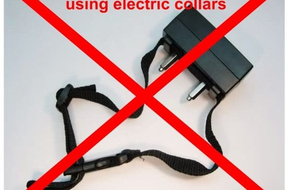 Policy on the Use of Electronic Collars