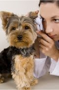 Aggression of Dogs in Veterinary Surgeries