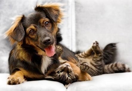 The Ten Tenets of Pet Care